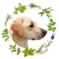 logo-chien-2