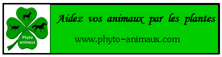 Bannière Phyto Animaux