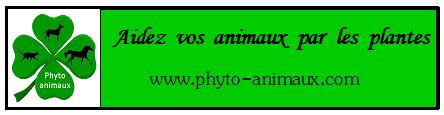 Bannière Phyto Animaux