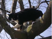 Sénilité chez une vieille chatte