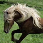 Crins, Belle robe et Mue du cheval