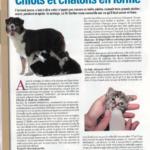 Nourrir chiots chatons